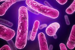 Бациллы туберкулеза