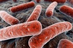 Размножение микобактерий