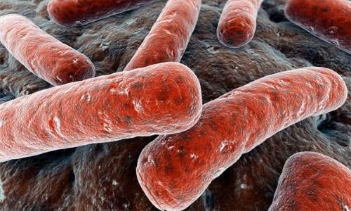 Палочка Коха - возбудитель инфекции