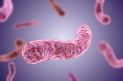 Возбудитель туберкулеза - микобактерия, палочка Коха